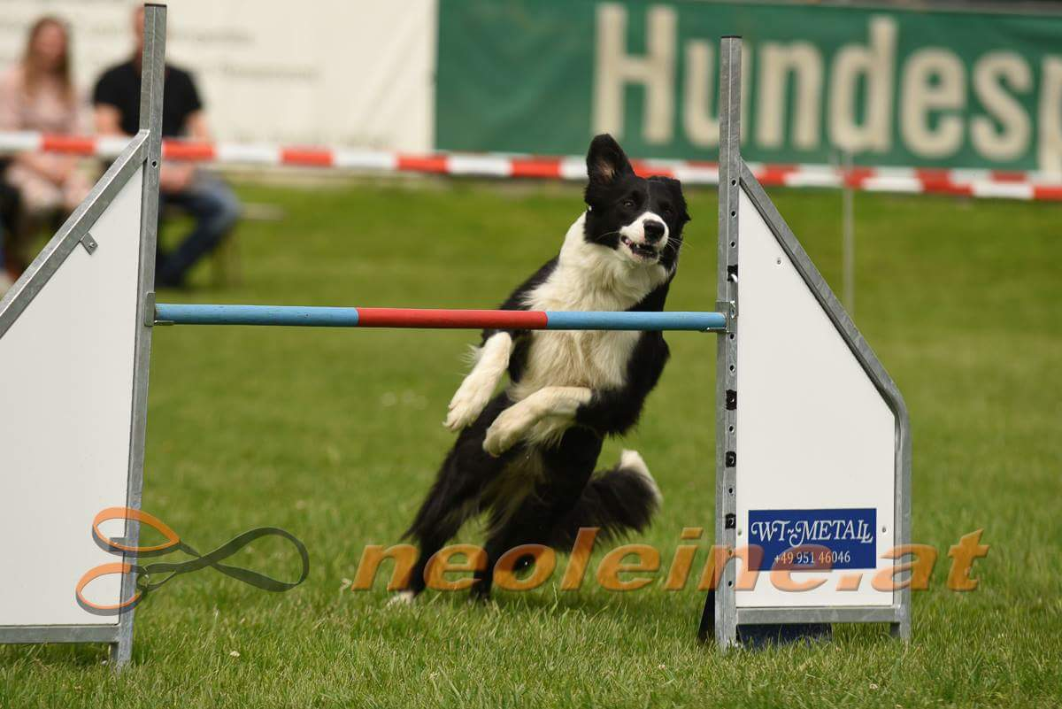 lilly-agility